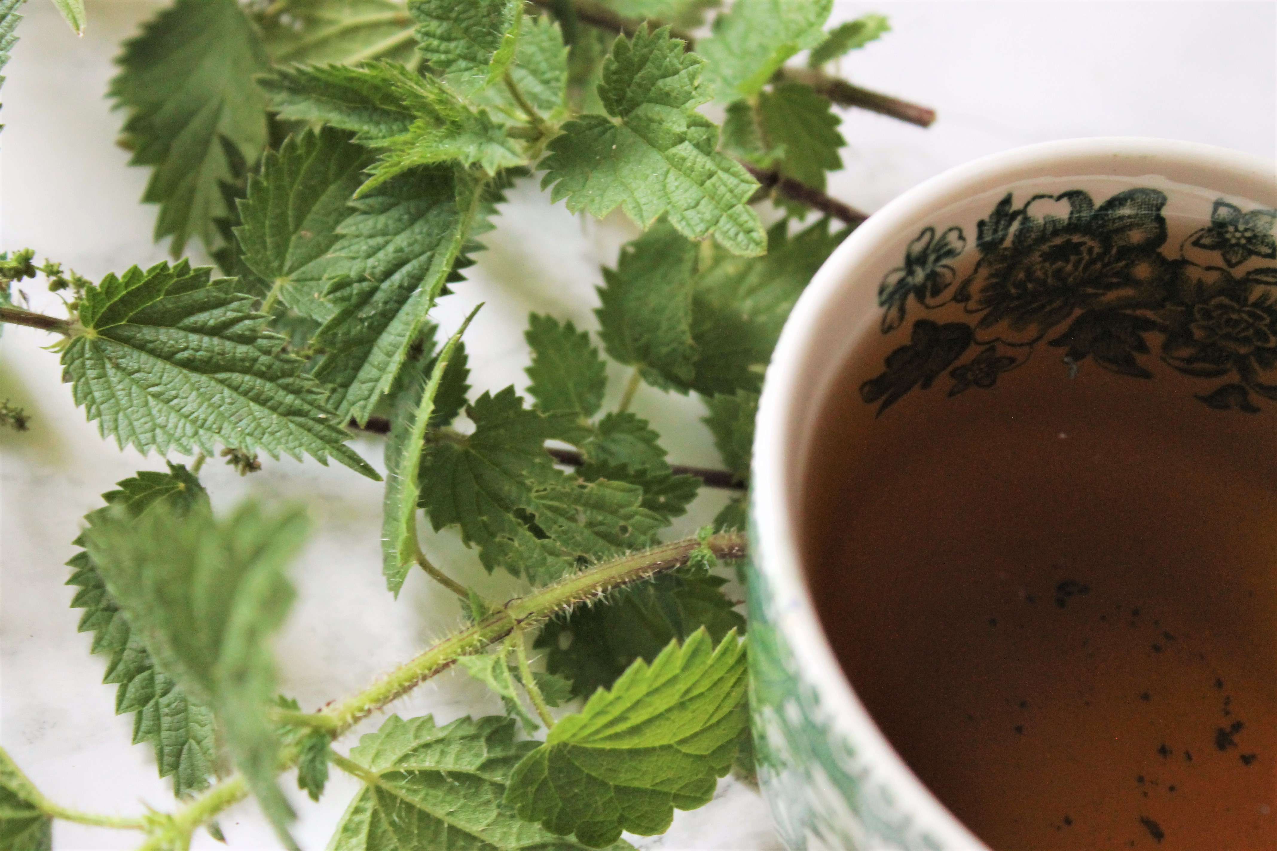 nettle sting leaves and tea