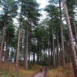 formby national park