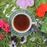 Pukka Wonder Berry Green Tea Review